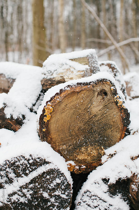 Fire wood under the snow  by Zocky for Stocksy United