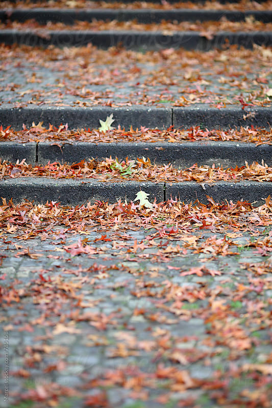 fallen leaves on stairs in a park by Marcel for Stocksy United