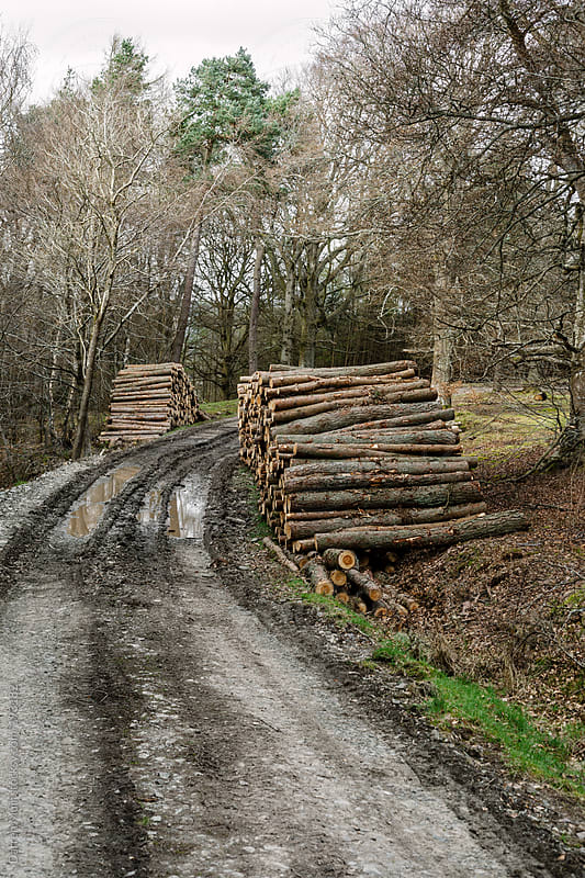 Lumber Yard. by Darren Muir for Stocksy United