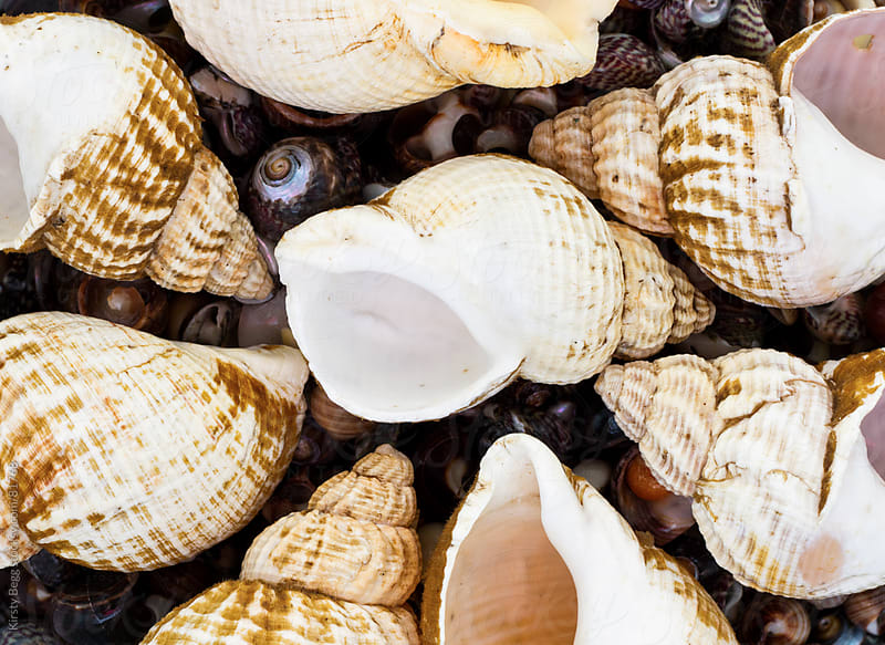 Sea shell collection filling the frame, from above by Kirsty Begg for Stocksy United