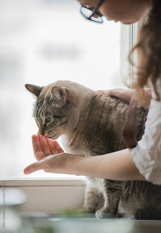 Woman feeding her cat while it sitting on windowsill by Milles Studio for Stocksy United
