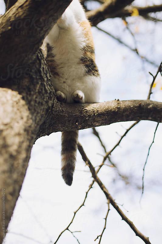 Cat on a tree by Jovana Rikalo for Stocksy United