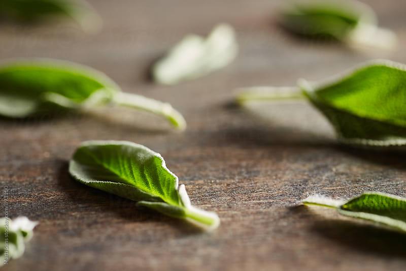 Soft focus of green fresh sage leaves by Martí Sans for Stocksy United