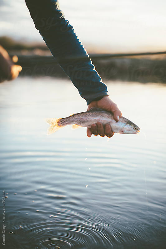Trout by Camrin Dengel for Stocksy United
