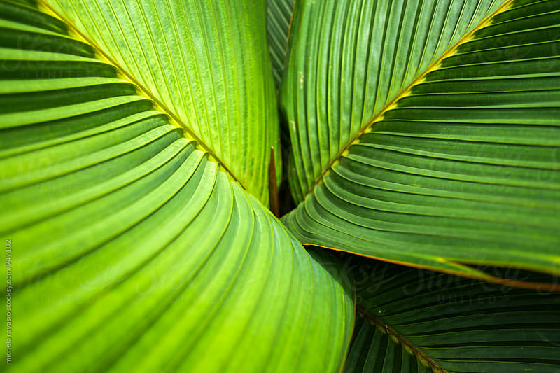 Close up of palm leaves by michela ravasio for Stocksy United
