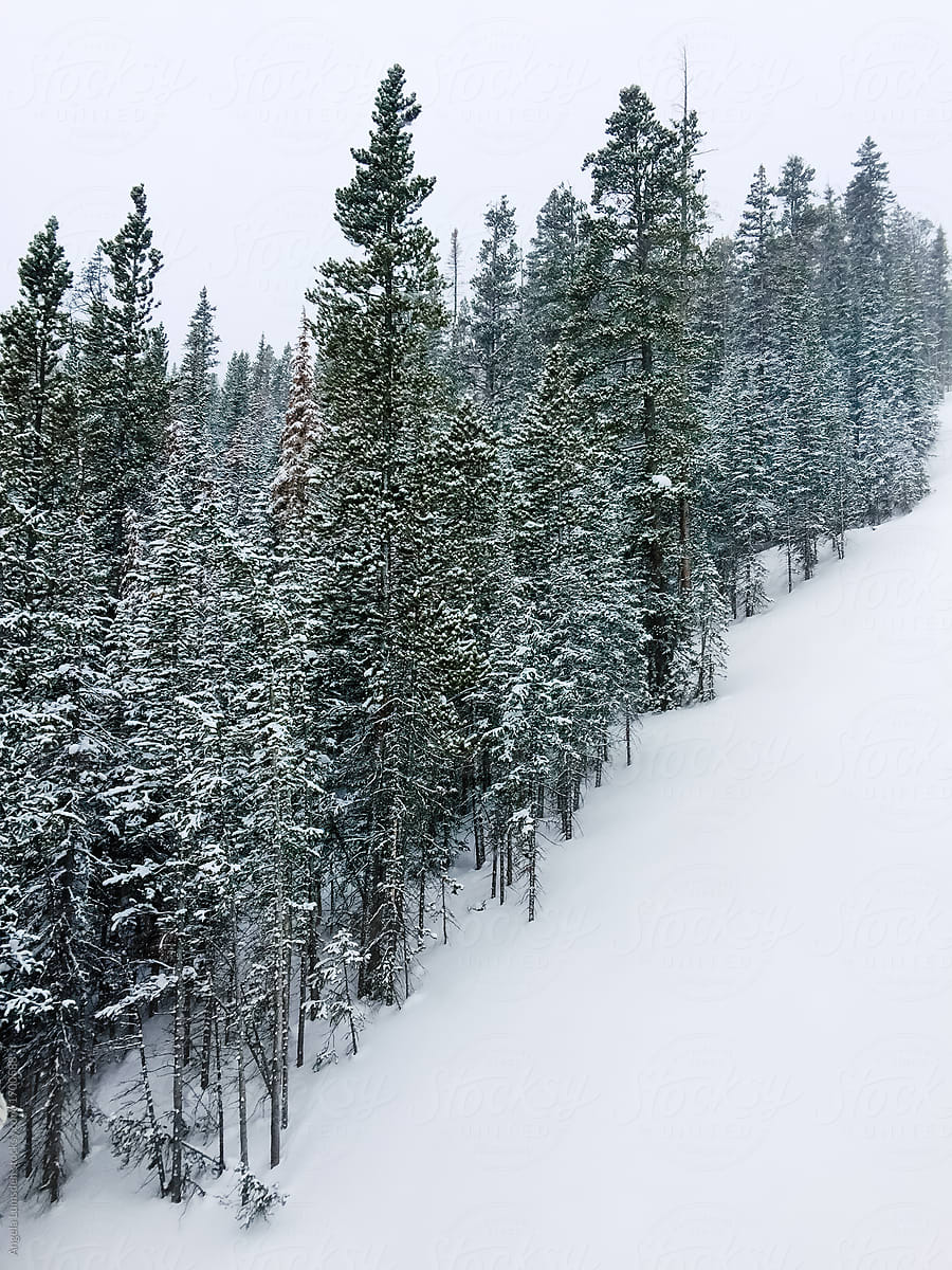 snow covered slope and pine trees in winter stocksy united