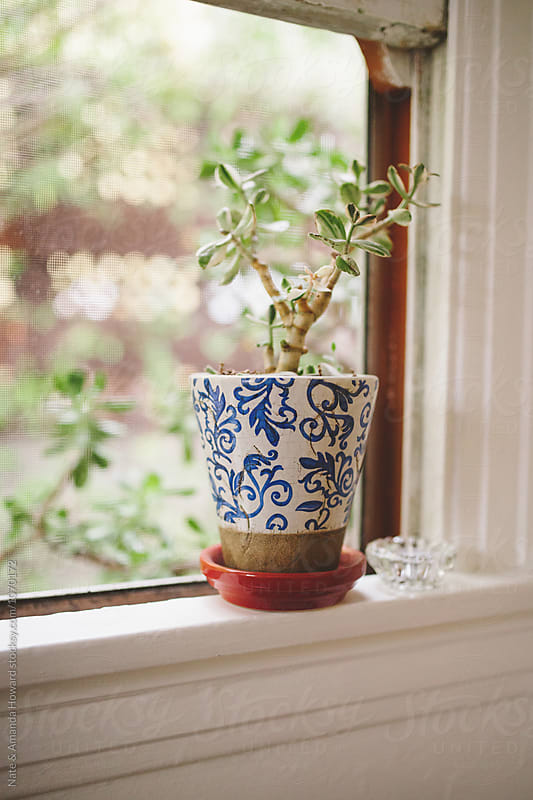 Windowsill and Houseplant by Nate & Amanda Howard for Stocksy United