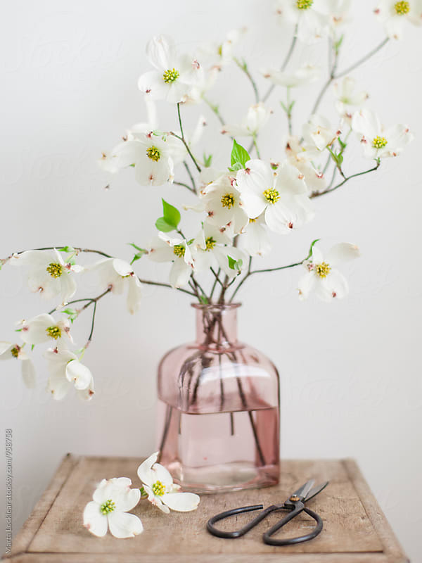 Dogwood blossoms with antique shears by Marta Locklear for Stocksy United