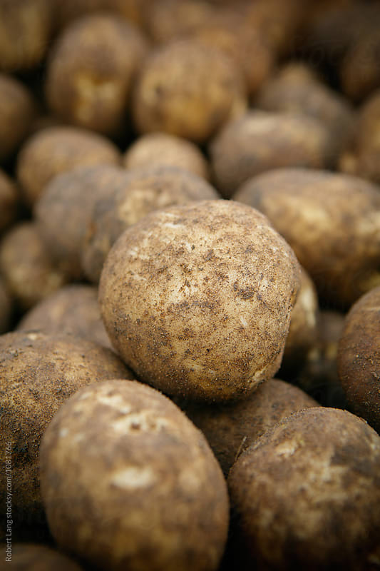Organically grown potatoes by Robert Lang for Stocksy United