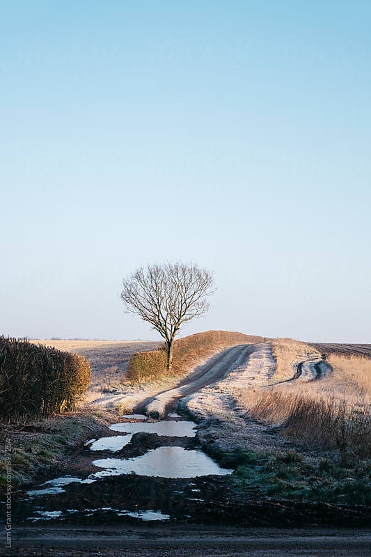 Tree, hedge and frost covered track beside a field at sunrise. Norfolk, UK. by Liam Grant for Stocksy United