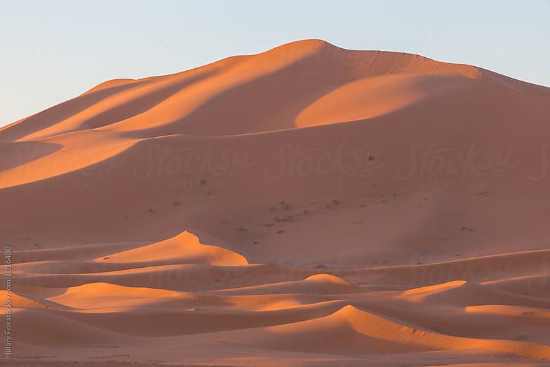 Sahara Desert by Hillary Fox for Stocksy United