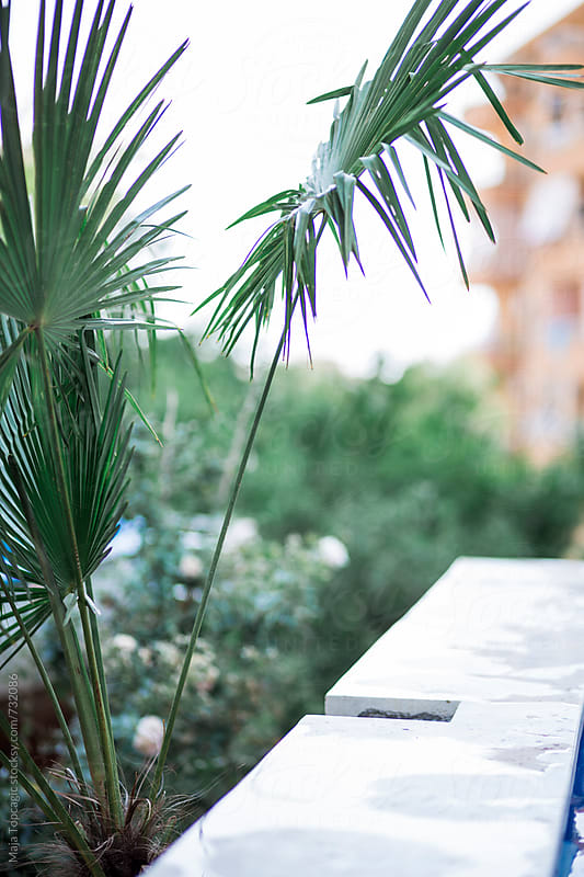 Palm leaves near the pool by Maja Topcagic for Stocksy United