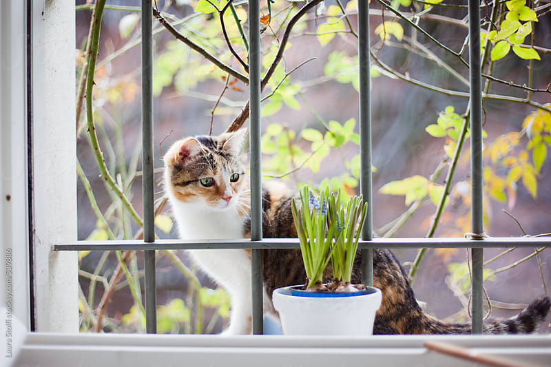 Cat discovering blossomed flowers in pot by Laura Stolfi for Stocksy United