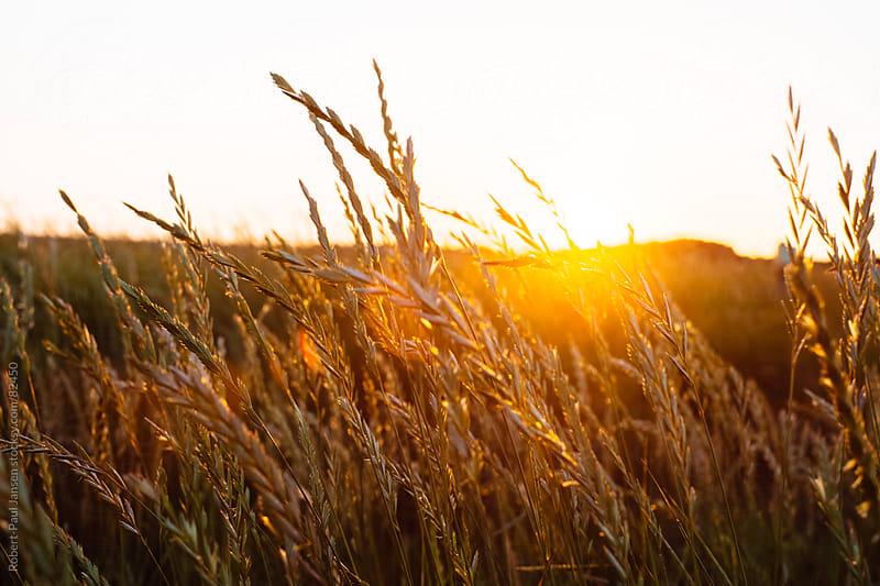 BEAUTIFUL, GOLDEN SUNSET 1 by Robert-Paul Jansen for Stocksy United