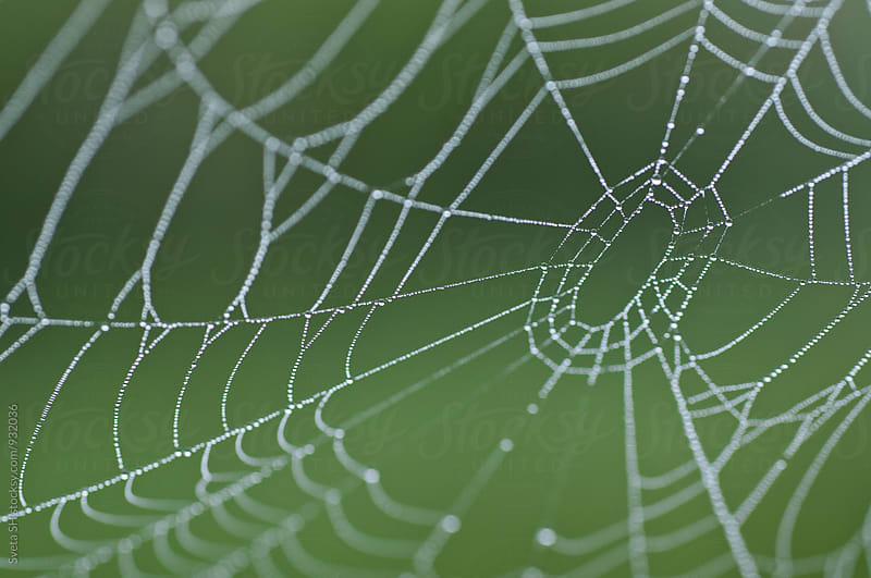 Spider web by Svetlana Shchemeleva for Stocksy United
