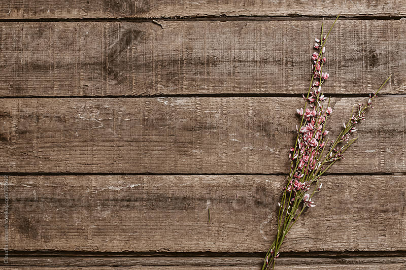 A Small Bunch of Pink Flowers on a Wooden Texture by Claudia Lommel for Stocksy United