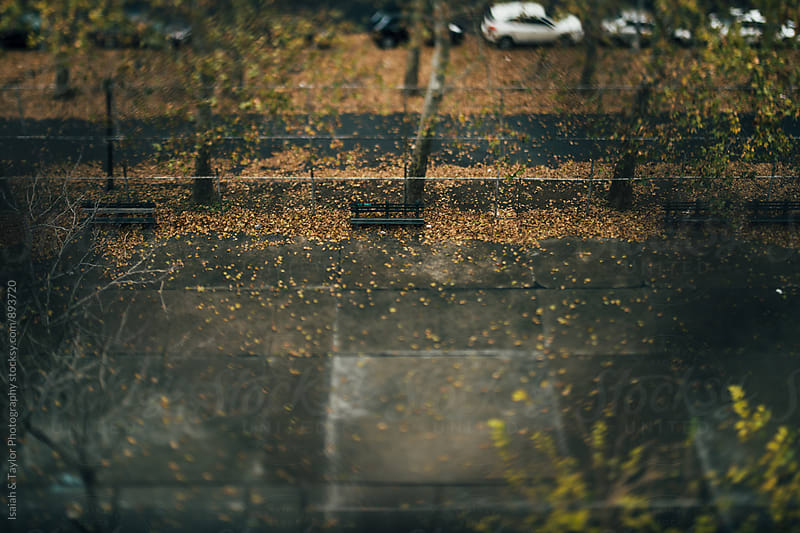 Sidewalk with leaves by Isaiah & Taylor Photography for Stocksy United