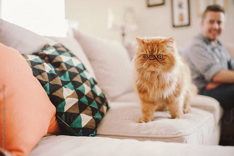 Serious cat walking on couch in home by Kristin Rogers Photography for Stocksy United