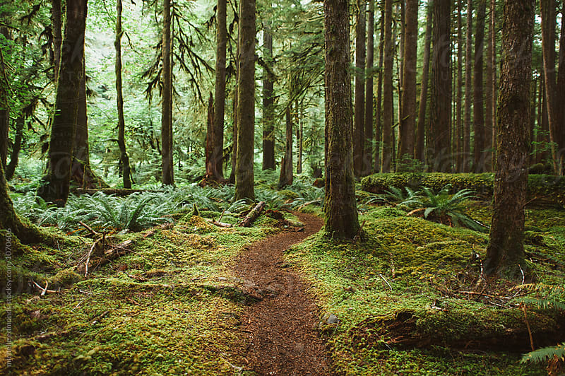 Olympic National Park Trail in Washington by michelle edmonds for Stocksy United