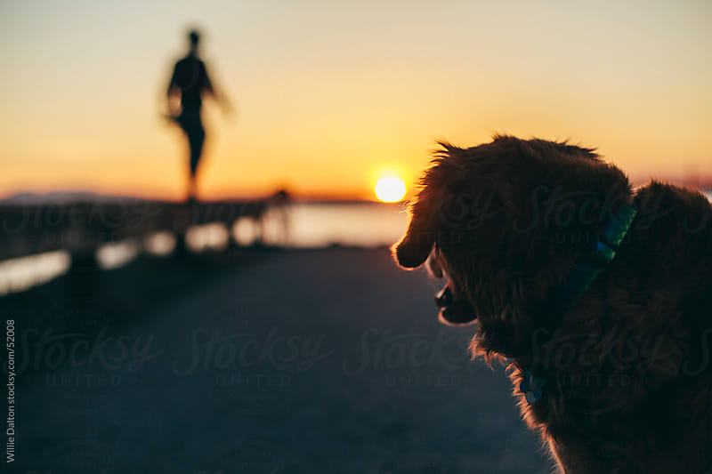 Dog in the Sunset by Willie Dalton for Stocksy United
