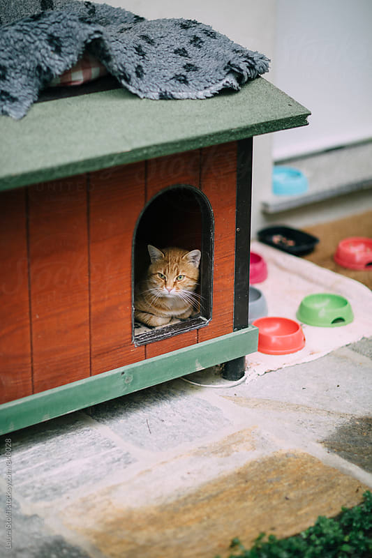 Red cat relaxing inside wooden kennel by Laura Stolfi for Stocksy United
