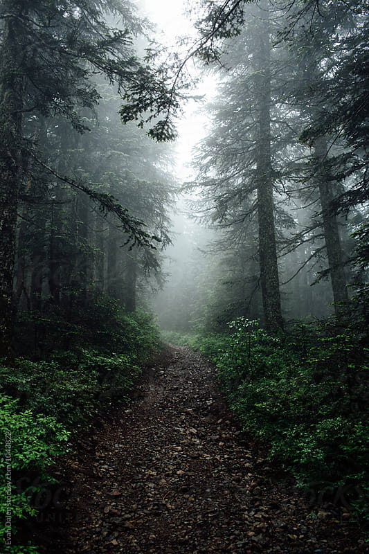 Trail Through Dark Forest by Evan Dalen for Stocksy United
