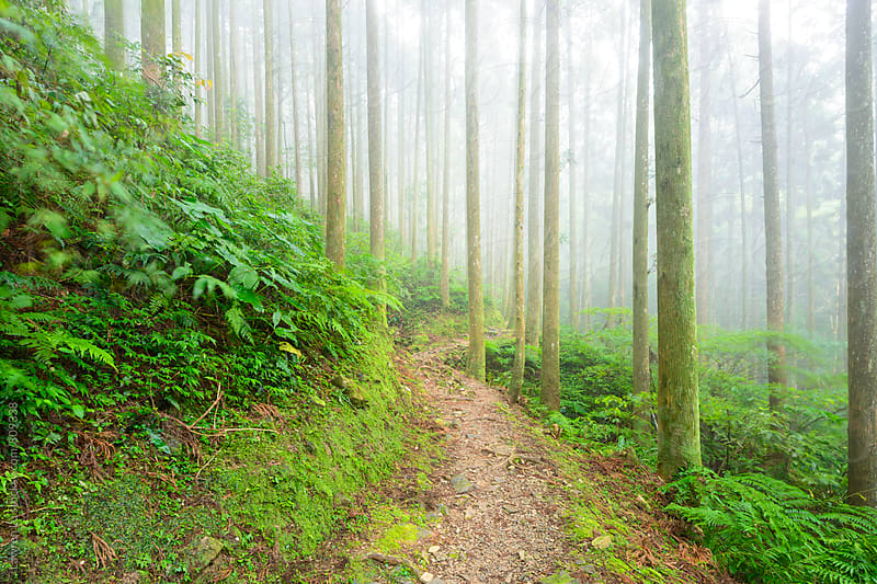 Small path in forest with tall green trees by Lawren Lu for Stocksy United