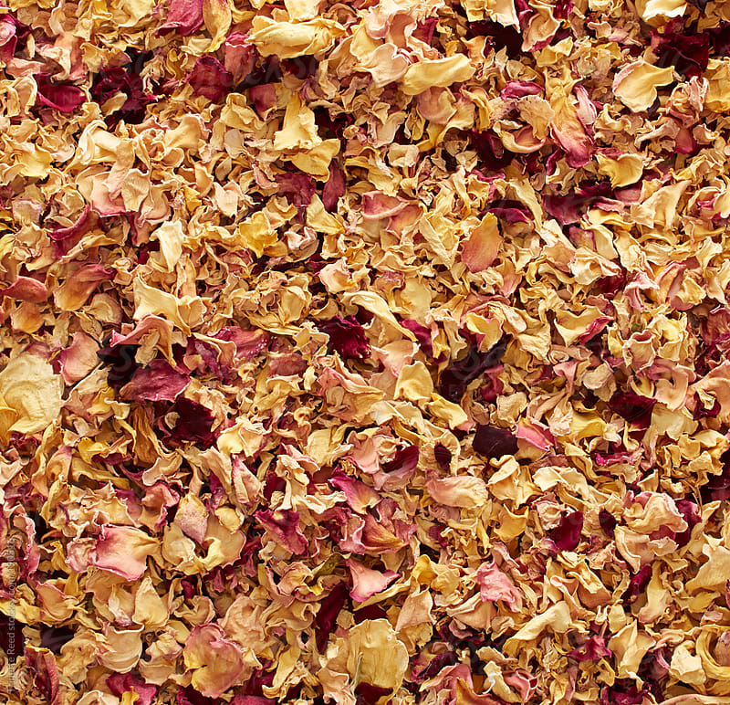 Background of rose petals  by Trinette Reed for Stocksy United