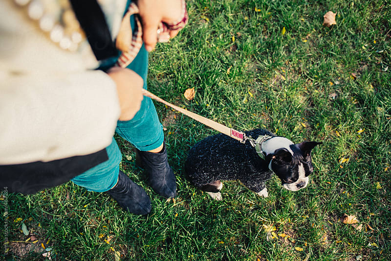 Cute Dog on a Leash by Lumina for Stocksy United