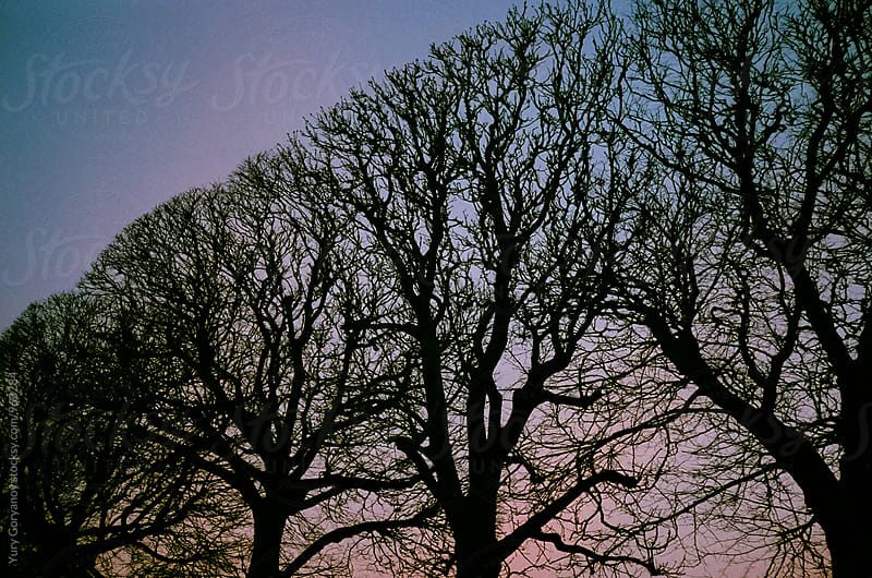 Silhouettes of trees at sunset by Yury Goryanoy for Stocksy United
