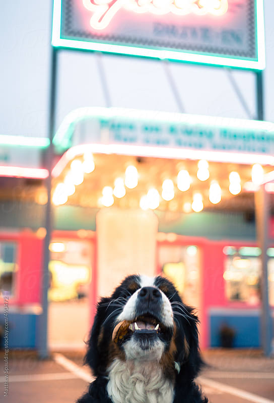 Pet dog with messy hamburger in mouth eating outside diner restaurant by Matthew Spaulding for Stocksy United