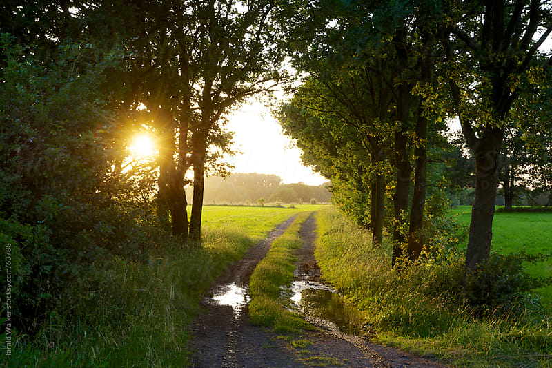 Sunset dirt road by Harald Walker for Stocksy United