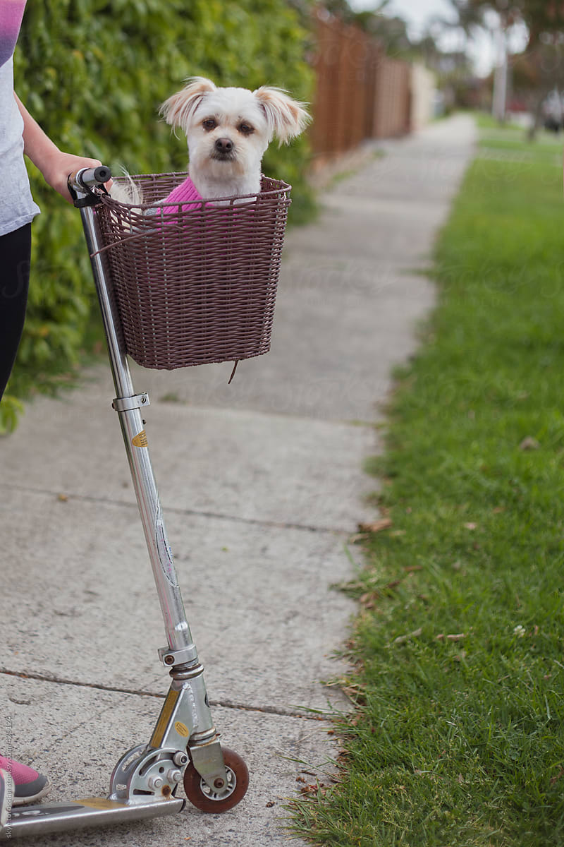 Stock Photo - Dog In Scooter Basket