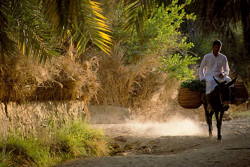 Farmer riding donkey. Farafra Oasis. Egypt. by Hugh Sitton for Stocksy United