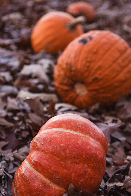Discarded orange pumpkins in the woods by Holly Clark for Stocksy United