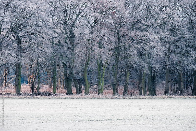 Edge of a woodland covered in a thick hoar frost. Norfolk, UK. by Liam Grant for Stocksy United