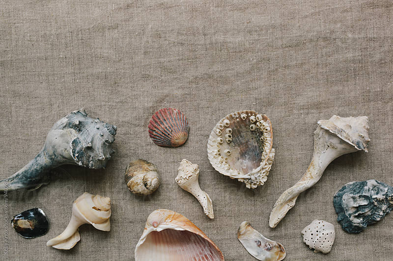 variety of shells on a linen background by Kelly Knox for Stocksy United