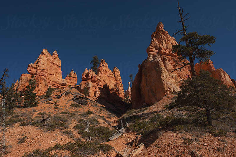 Hoodoo at Bryce Canyon by Nicholas Roberts for Stocksy United