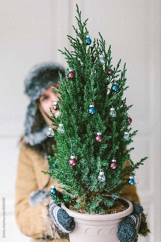Woman holding a smal Christmas tree by Zocky for Stocksy United