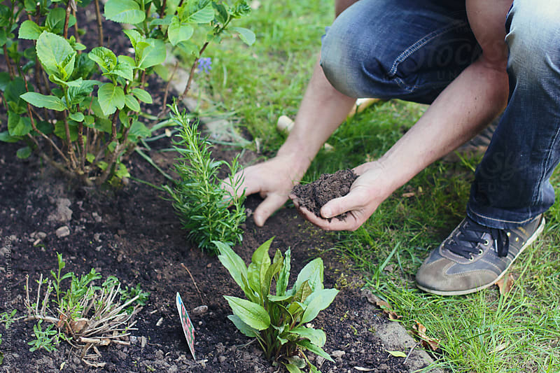 A man wearing jeans is gardening, putting some fresh soil near newly planted plants as needed.  by Kaat Zoetekouw for Stocksy United