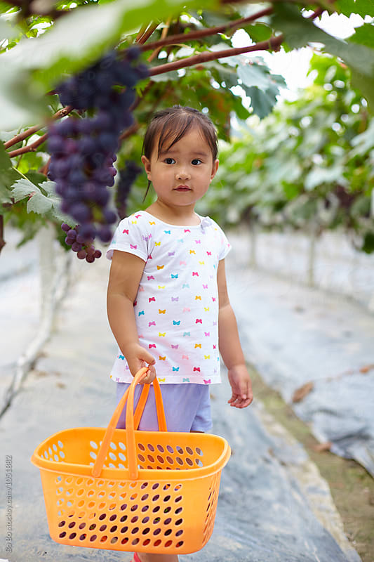 Little girl picking grape in the farm by cuiyan Liu for Stocksy United