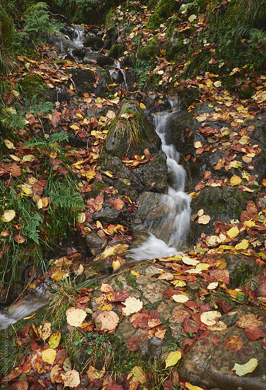 Small waterfall and autumnal leaves on a hillside. Cumbria, UK. by Liam Grant for Stocksy United