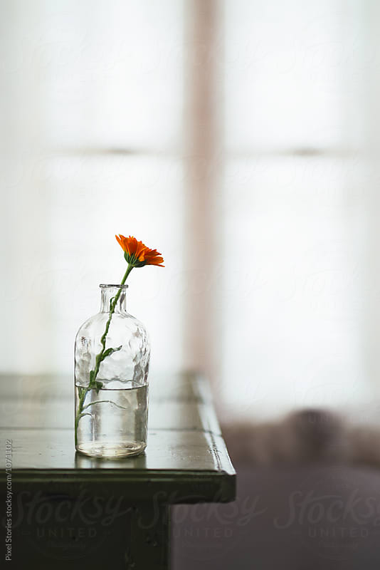 Marigold flower in glass bottle by Pixel Stories for Stocksy United