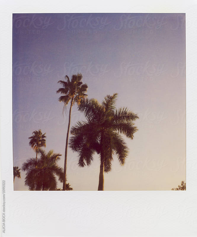 Tall Palm Trees During Sunset On Expired Polaroid Film by ALICIA BOCK for Stocksy United
