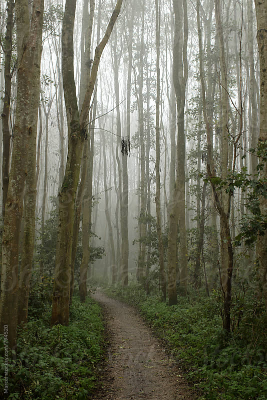 Footpath through a foggy forest in november by Marcel for Stocksy United