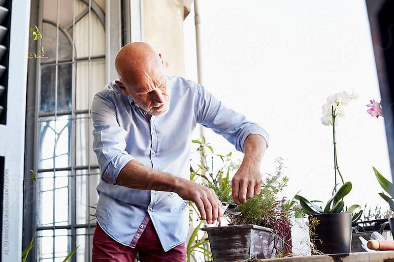 Senior Man Tending Plant On Balcony by ALTO IMAGES for Stocksy United