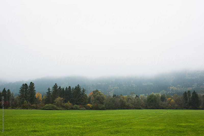 Pasture on a Foggy Day by Mosuno for Stocksy United