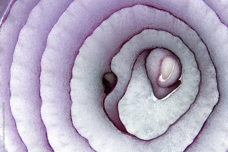 Closeup macro macrophotograph of red onion showing patterns, textures, colors in interior by Ron Mellott for Stocksy United