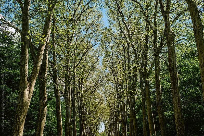 Tree-lined road by Joseph West Photography for Stocksy United