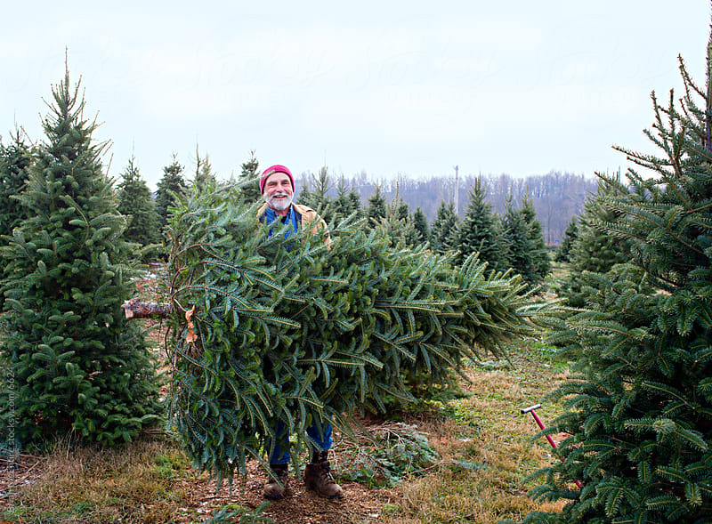 Grandfather in Family Tradition: Getting a Christmas Tree by Brian McEntire for Stocksy United